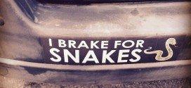 Photo: I Brake for Snakes