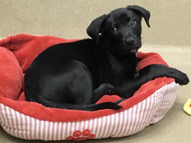 Stolen puppy returned to Wake County SPCA adoption center